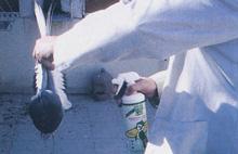 Insecticidas y bacterizidas para la higiene del palomar