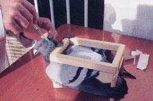 Inyección subcutánea (Vacunas)